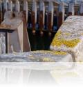Warnemünde Alter Fährhafen - Mittelmole 15