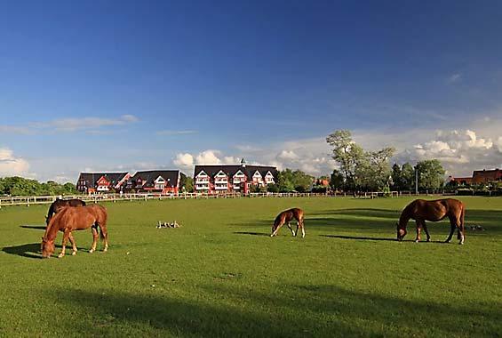 Pferdekoppeln am Hotel Strandhafer